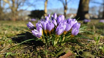 Márciusig még egy nap, a tavasz már itt van