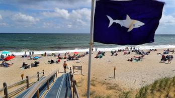 Az elmúlt két évtizedben megkétszereződtek a cápatámadások