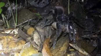 Szereti a cuki kis emlősöket, gyűlöli a szőrös pókokat? Van önnek egy horrorfilmünk