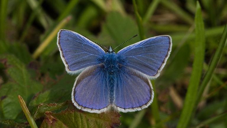 A lepkék szárnyát nem is festékanyag, hanem csipkés nanoszerkezet színezi