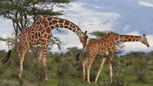 6 állat, amelyiknek rosszabb a szexuális élete, mint neked