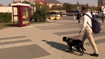 Nem engedték fel a Wizz Air gépre a vakvezető kutyája miatt, 150 ezres kártérítést kap a látássérült fiú