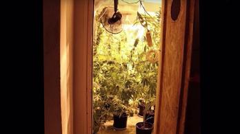 Csőtörés miatt nyitották ki a lakást, marihuánaültetvényt találtak