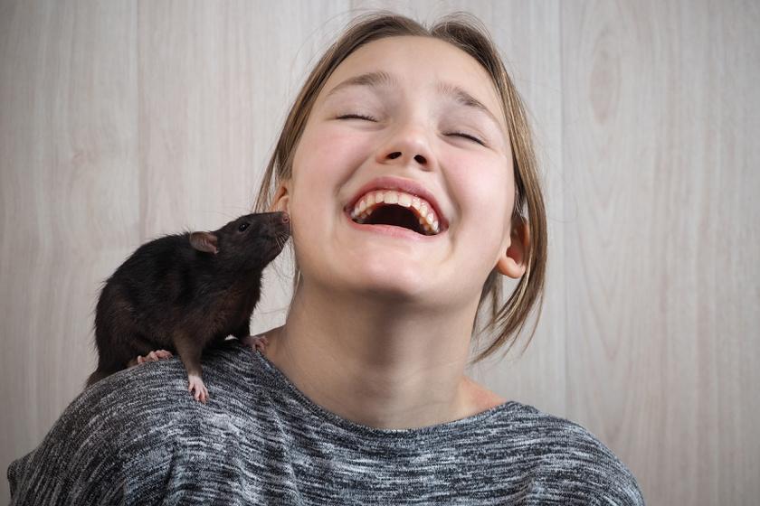 patkány háziállat (2)