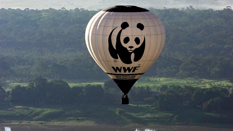 A WWF megvédi a pandákat, de megkínozza a helyieket?