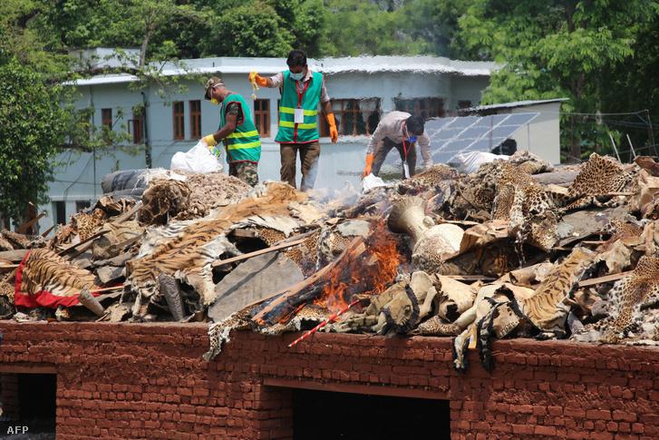 A Chitwan Nemzeti Parkban katonák égetik el az orvvadászoktól elkobozott állati termékeket, jelképesen az illegális állatkereskedelem ellen.