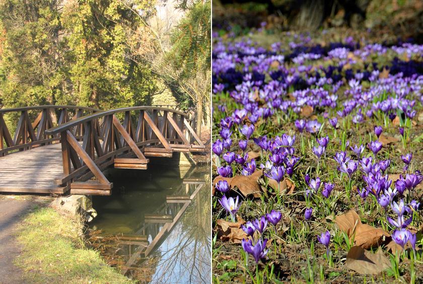 Az ország legnagyobb füvészkertjében, a vácrátóti Nemzeti Botanikus Kertben mindig korán indul a tavasz: az első hagymások, krókuszok mezői között sétálhattok.