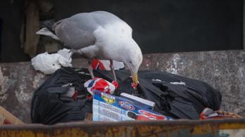 A lufik a tengeri madarak legnagyobb ellenségei