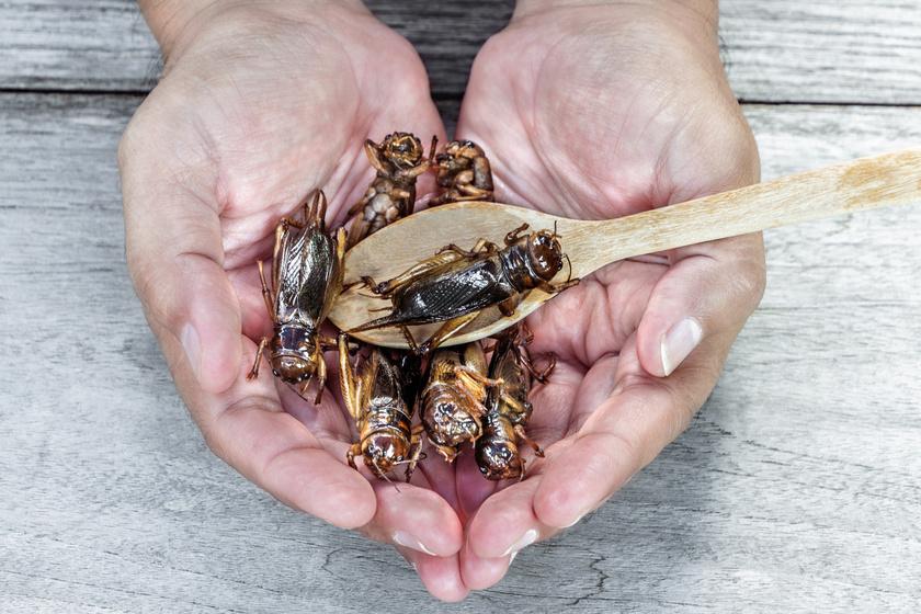 rovarok-elelmiszer