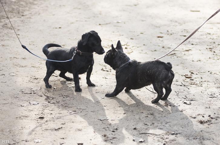 Két kutya a sóstói erdõben Nyíregyházán 2018. január 7-én.