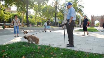 Az időskori kutyasétáltatás miatt nagyobb a csonttörés kockázata