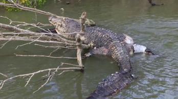 Lelőtték Bismarckot, a kedves, 80 éves krokodilt