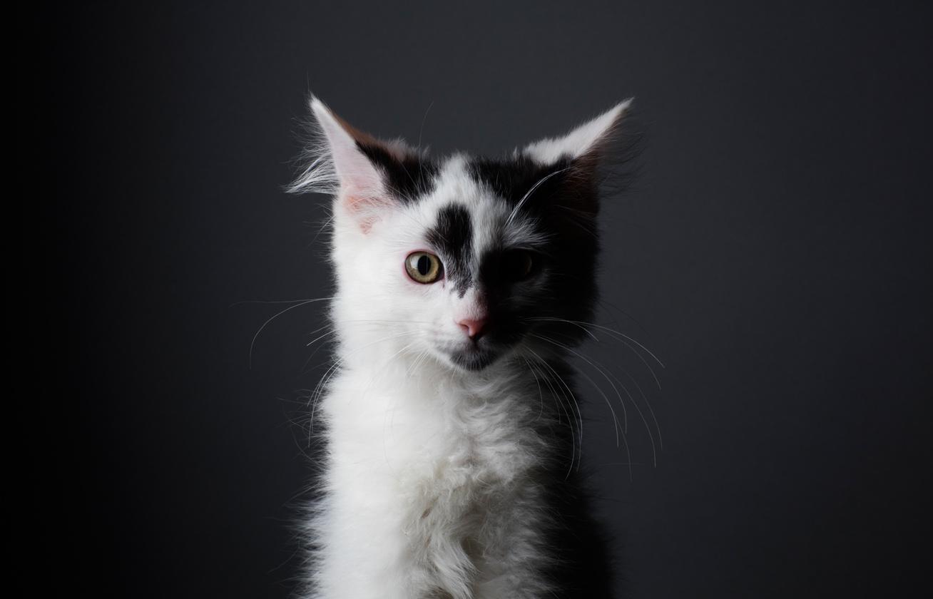 vitiligo macsek