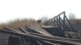 Leégett a védett nádas nagy része Farmoson