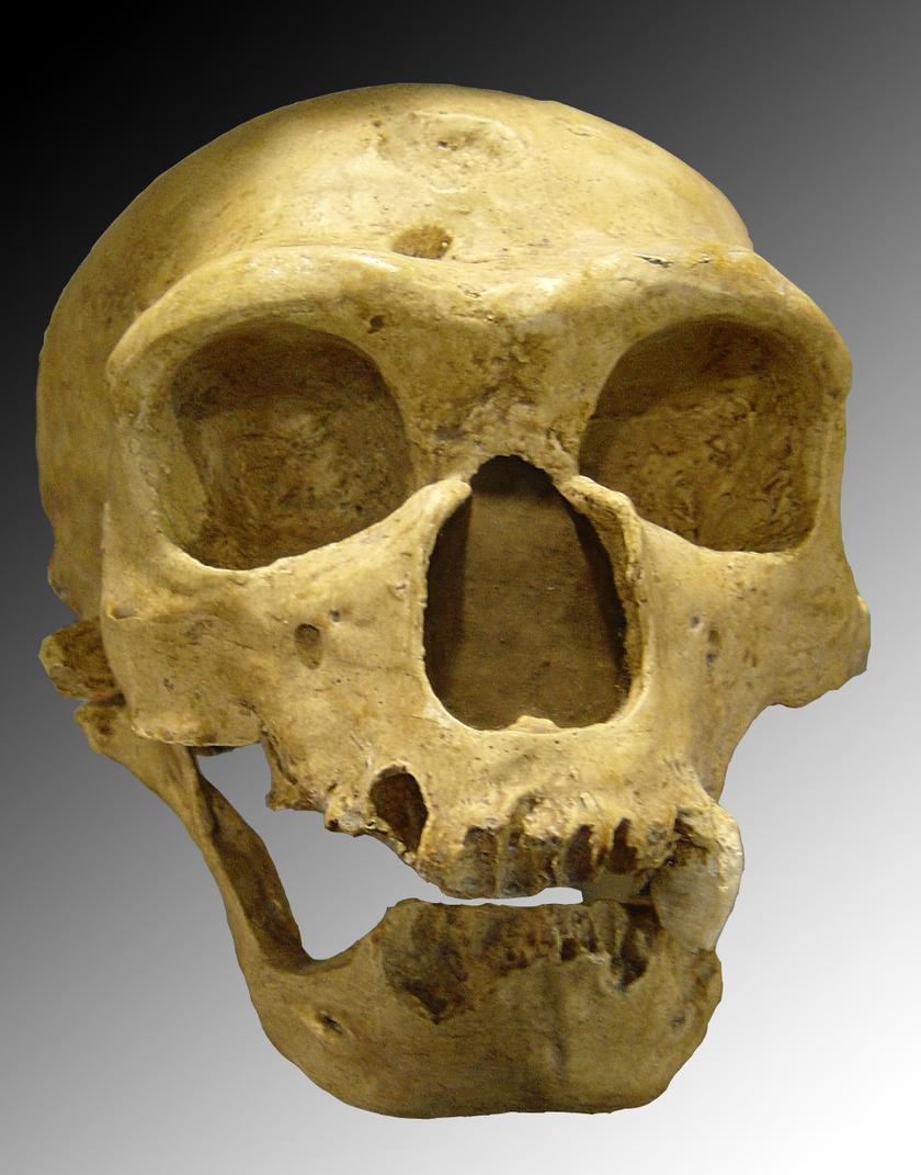 Neander-völgyi koponya.