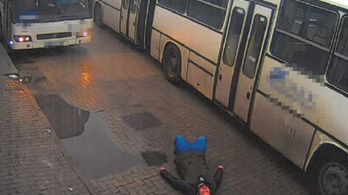 Megmutatta a buszsofőrnek, hogy ki az úr a háznál, keresik a lesántult gyalogost