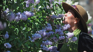 Az ember egybillió illatot képes megkülönböztetni