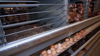 Mégsem lesz óriás tojótyúkfarm Vasban, a termelők megakadályozták