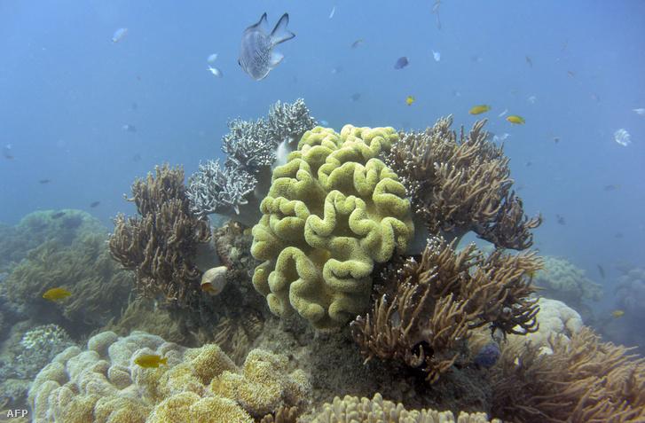 Halak úsznak az Ausztrál Nagy-korallzátonynál