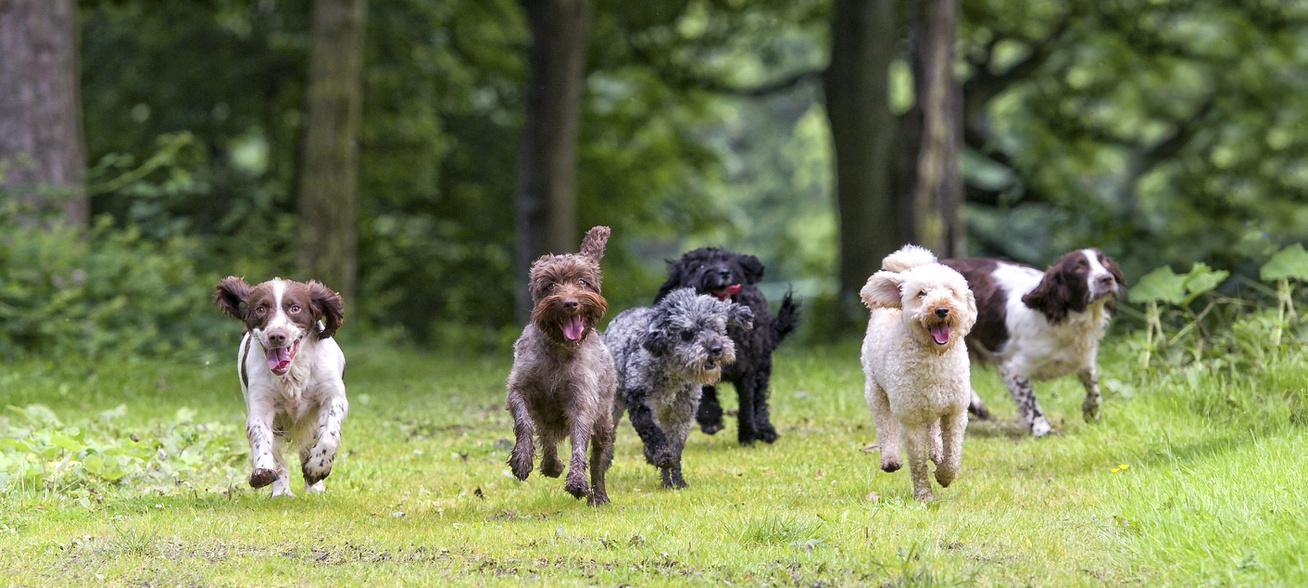 kutyák futás séta