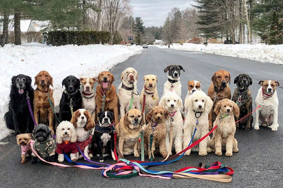 sok kutya sétál 840