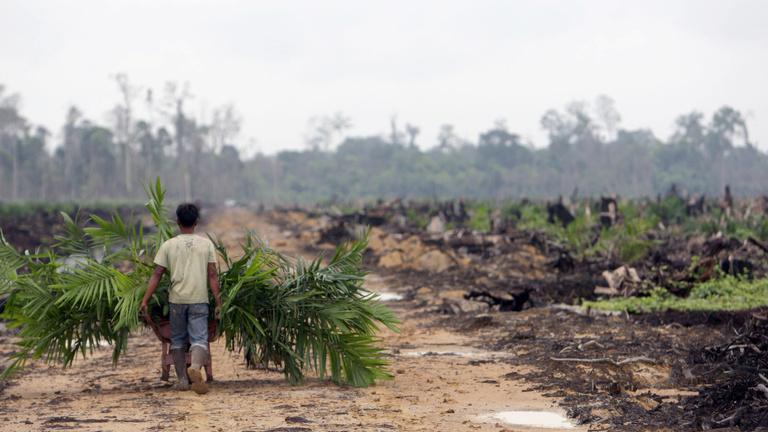 Megszüntetné a pálmaolaj bioüzemanyagként való felhasználását az Európai Bizottság
