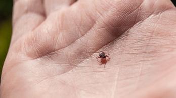 Kevesen kaptak védőoltást a kullancsok által terjesztett agyvelőgyulladás ellen