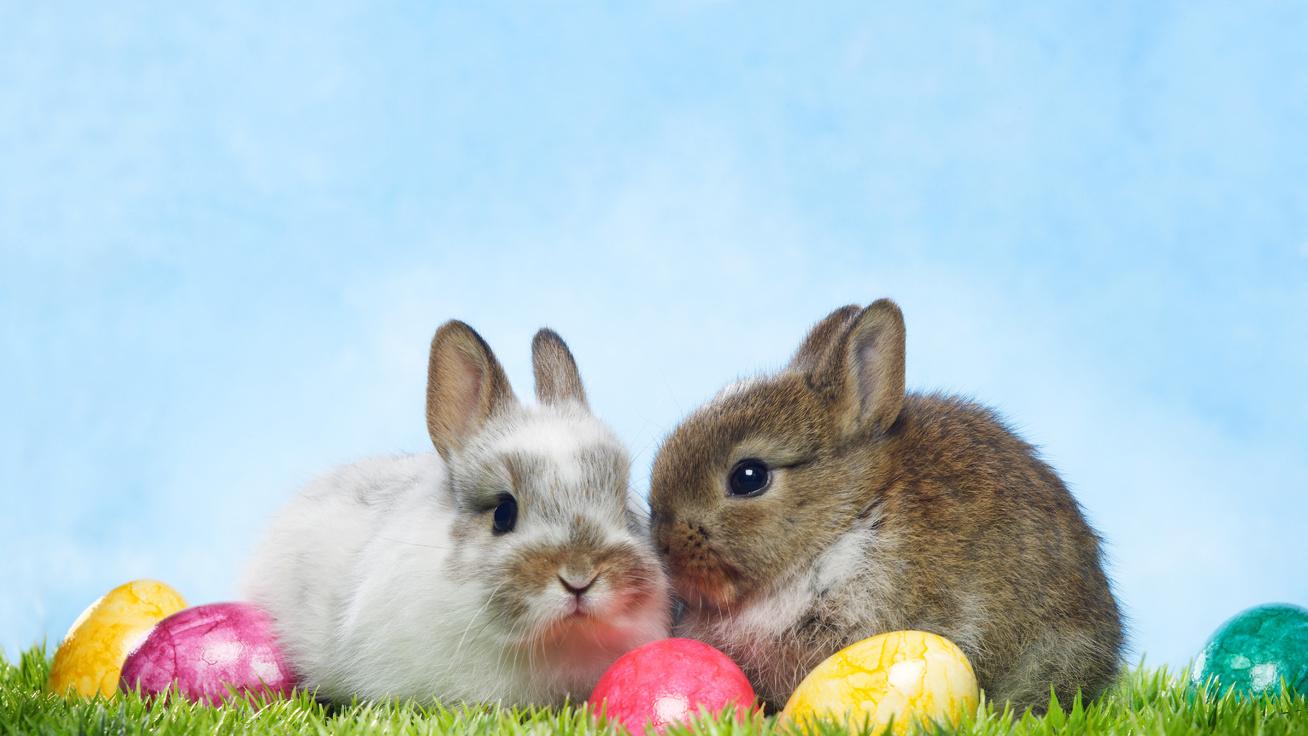 Miért pont nyuszi hozza a tojásokat húsvétkor? Nyakatekert a történet
