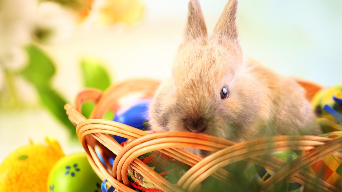 Miért tojik pont tojást a nyúl húsvétkor? Egyszerűbb a magyarázat, mint gondolnád