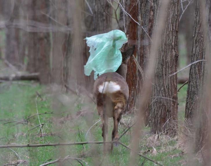 tiszaalpár-őz-erdő