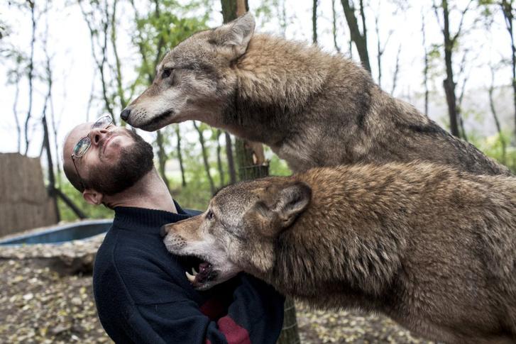 A szerző és a farkasok