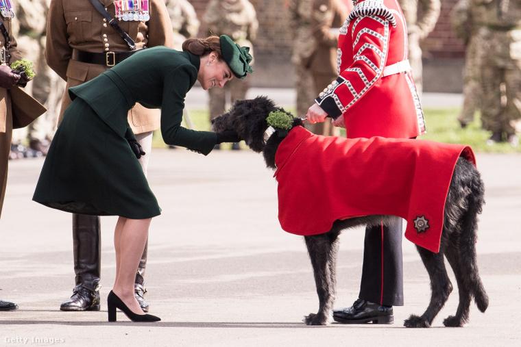 Ha a képre kattint, a kutya még nagyobb lesz! És vele együtt az egész fotó is!