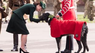 A nap képe: Katalin hercegné egy irdatlan nagy ír kutyát simogat