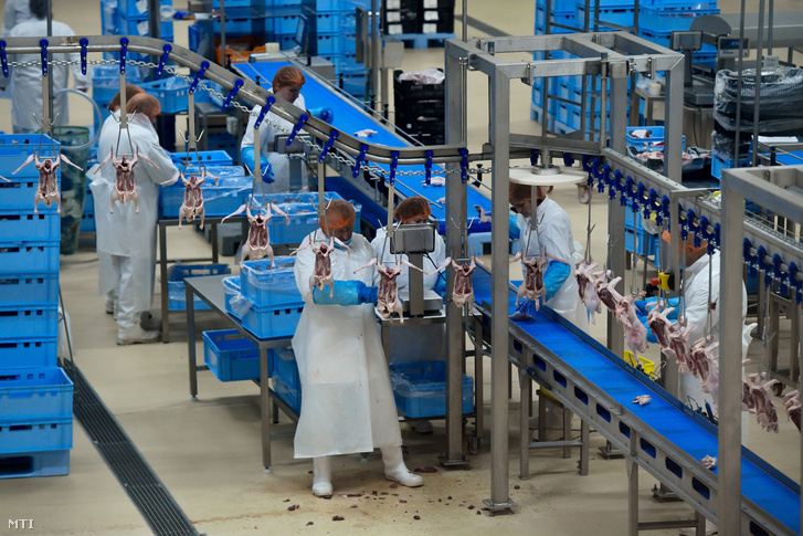 Gyártósor a Hunent Víziszárnyas Feldolgozó Zrt. gyárában az avatás napján 2019. január 28-án.