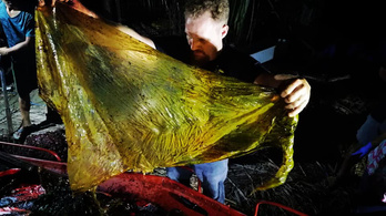 Negyven kiló műanyag volt egy bálna gyomrában