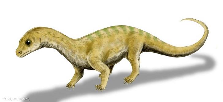 Fiatal Massospondylus dinó