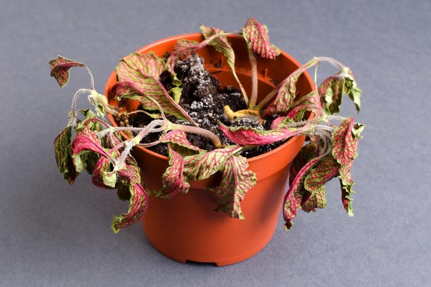Mitől penészes a virágföld? Mutatjuk az okokat, és hogy mit tehetsz ellene