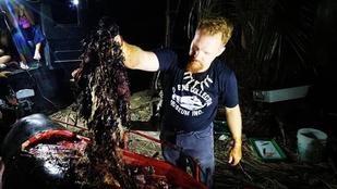 Új rekord: 40 kiló műanyagot találtak egy bálna gyomrában