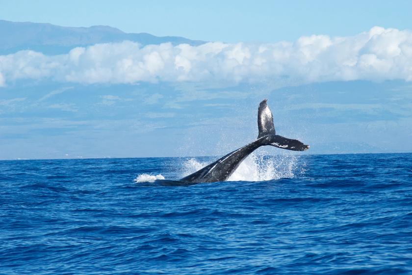 Elkeserítő dolgot találtak egy partra vetett bálna gyomrában: azonnal elpusztult tőle