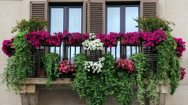 A déli fekvésű erkélyek legszebb virágai