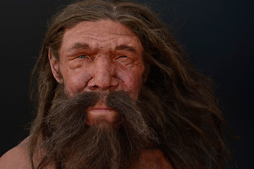 Neandervölgyi rekonstrukció