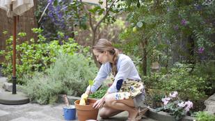 Rovarhotel és tökéletlenség: ezek 2019 kerttrendjei