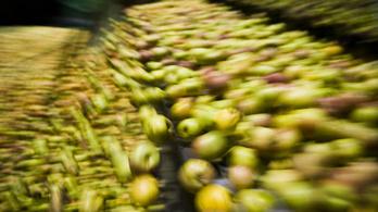 Több tízezer tonnányi alma fonnyad a hűtőtárolókban
