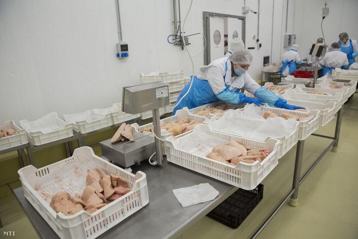 Libamájat dolgoznak fel a Pannon Fine Food Kft. orosházi üzemében 2017. február 14-én. A madárinfluenza miatt a cég 70 százalékkal volt kénytelen csökkenteni a termelést. A szárnyasok megbetegedése bevételkiesést okoz a baromfi ágazatban.