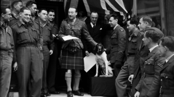 A hadifoglyok helyett vállalta az ütéseket a hős kutya