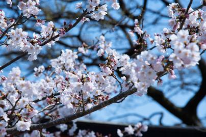 tavaszi-viragzas