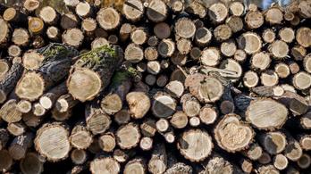 Védett erdőt irthattak ki Balatonfűzfőn egy röplabdacentrum kedvéért