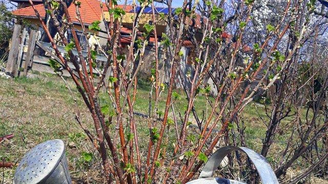 Tavasz a kertben
