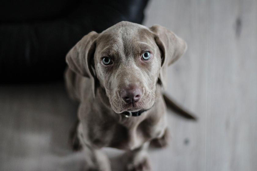 Mit tesz a kutya, ha sír a gazda? Érdekes kísérletben vizsgálták empátiájukat