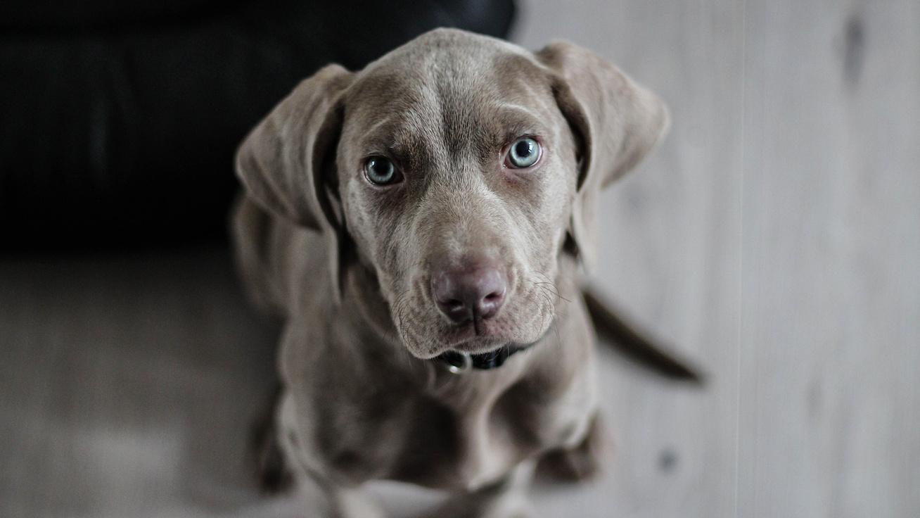 kutya2